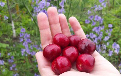 Primavera: in salute con i frutti di stagione